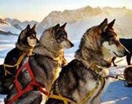 Husky - Tour mit Schlittenhunden